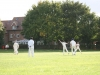 Wantage Cricket Club vs Harwell 2011 092