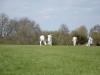 Wantage Cricket Club Tour Of Cambridge 2013 2024