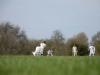 Wantage Cricket Club Tour Of Cambridge 2013 2076