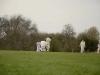 Wantage Cricket Club Tour Of Cambridge 2013 2099